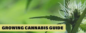 Grow Guide