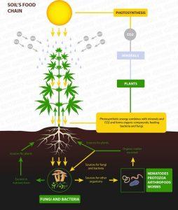 Soil food web cannabis